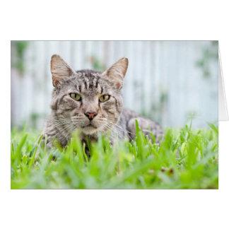Wilde Katze auf dem Rasen Karte
