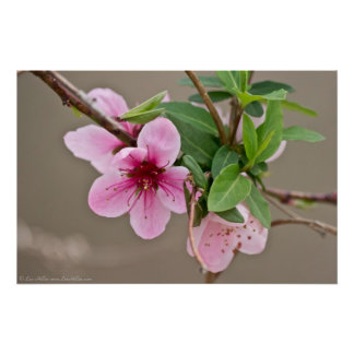 Wilde Kirschblüten im Waldplakat Poster