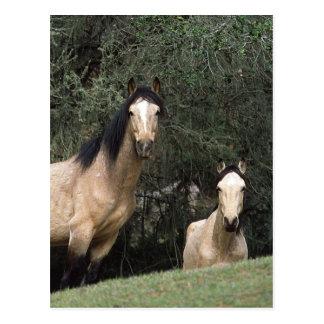 Wilde Mustang-Pferde 6 Postkarte