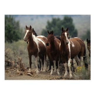Wilde Mustang-Pferde 7 Postkarte