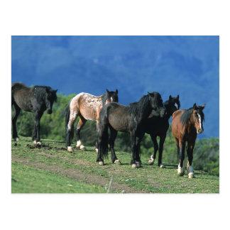 Wilde Mustang-Pferde in den Bergen Postkarte