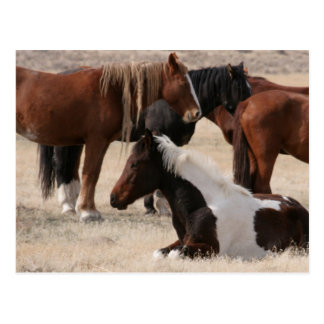 Wilde Mustangs Utahs Postkarte
