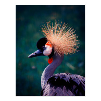 Wilde Natur Postkarte