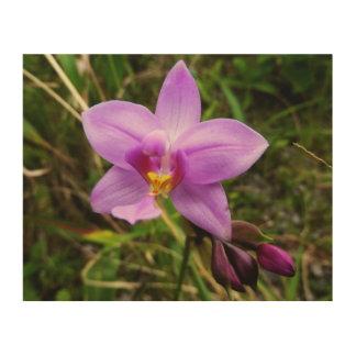 Wilde Orchideen-lila tropische Blume Holzleinwand