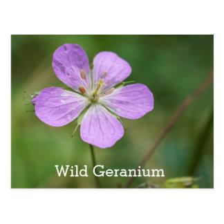 Wilde Pelargonie-Rosa-Wildblume-Namen-Postkarte Postkarte