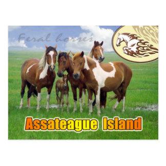 Wilde Pferde, Assateague Insel national. Küste Postkarte