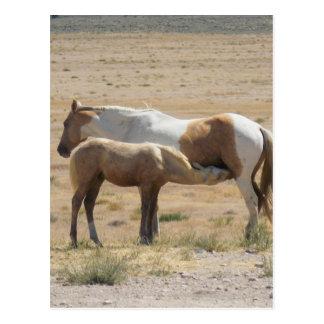Wilde Pferde, die ohne Text pflegen Postkarte