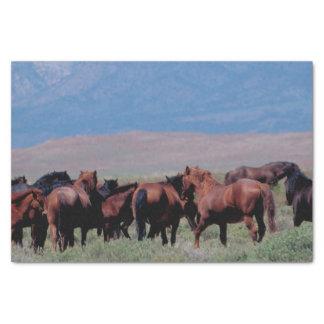 Wilde Pferde heraus nach Westen Seidenpapier