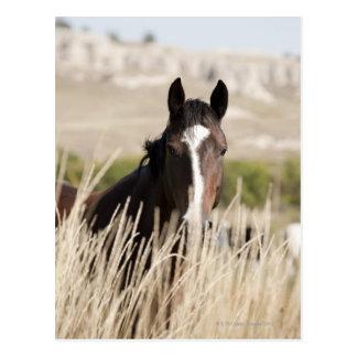 Wilde Pferde in South Dakota Postkarte