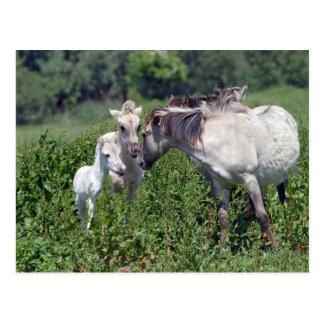 wilde Pferde mit weißer Fohlenpostkarte Postkarte