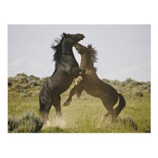 Wilde PferdeEquus caballus) wilde Pferde Postkarte