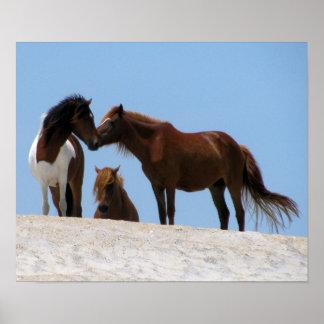 Wilde Pferdeplakat Poster
