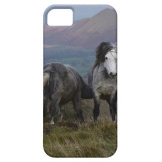 Wilde Ponys iPhone 5 Etuis