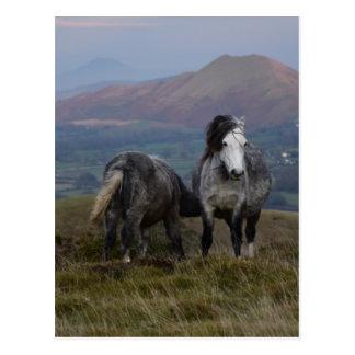 Wilde Ponys Postkarte