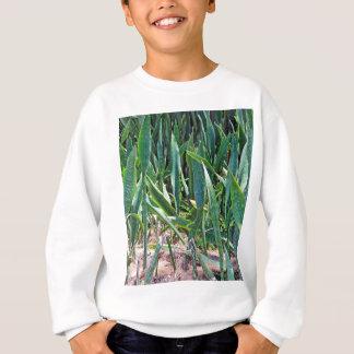 Wilde Schlangen-Pflanze draußen in Florida Sweatshirt