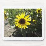 Wilde Sonnenblume Mauspads