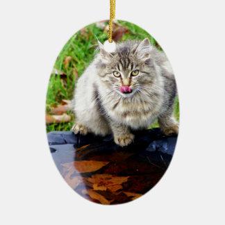 Wilde Tabbykatze mit einem piercing Blick Ovales Keramik Ornament