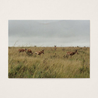 Wilde Tiere Afrikas Kenia Visitenkarte