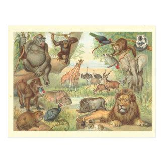 Wilde Tiere von Afrika Postkarte