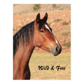 Wilde und freie Mustang-Postkarte Postkarte