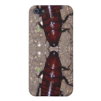Wilde Zartheits-Küche - Wissenschaft, Insekten der Hülle Fürs iPhone 5