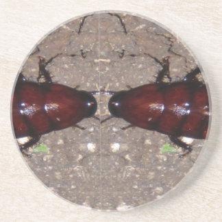 Wilde Zartheits-Küche - Wissenschaft, Insekten der Sandstein Untersetzer
