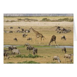 Wildebeests, Zebras und Giraffen erfassen an a Karte