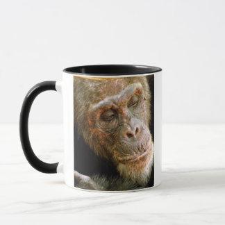 Wilder alter männlicher Schimpanse Tasse