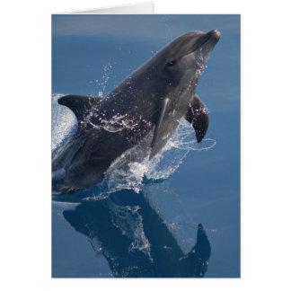 Wilder Delphin Karte