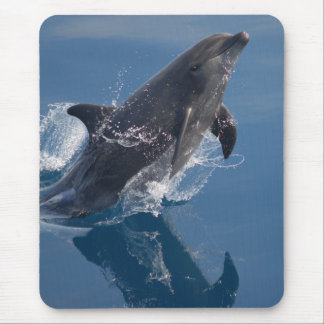 Wilder Delphin Mousepad