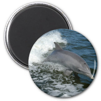 Wilder Delphin-runder Magnet Runder Magnet 5,1 Cm