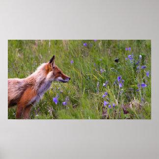 Wilder Fox Poster