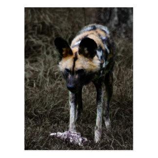 Wilder Hund Postkarte