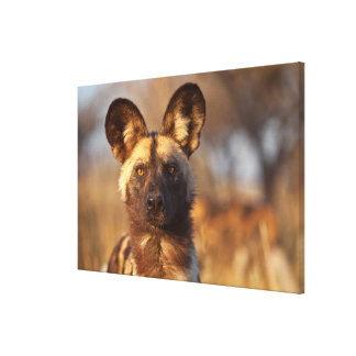 Wilder Hundeporträt Leinwanddruck