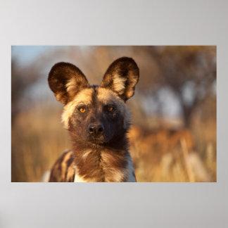 Wilder Hundeporträt Poster