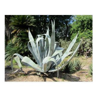 Wilder Kaktus Postkarte