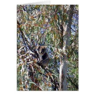 Wilder Koala-Bär in den Gummis, Karte