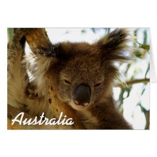 Wilder Koala, der auf Eukalyptus, Australien, Karte