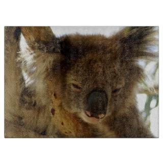 Wilder Koala, der auf Eukalyptusbaum Foto-Glas Schneidebrett