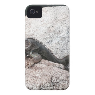 Wilder Leguan iPhone 4 Etuis