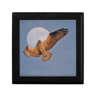 Wilder Osprey u. Supermond-Foto-Entwurf Erinnerungskiste