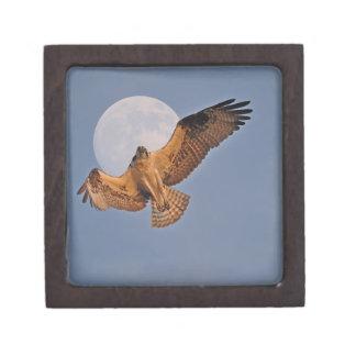 Wilder Osprey u. Supermond-Foto-Entwurf Schmuckkiste
