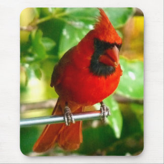 Wilder roter Kardinal in Hawaii Mousepad
