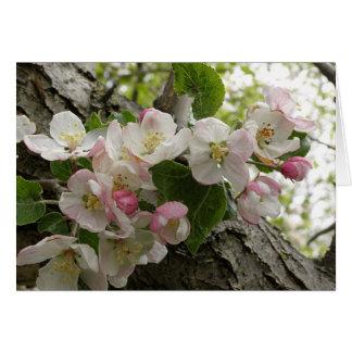 Wildes Apple-Blüten - Gruß-Karte