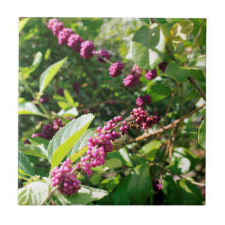Wildes Beautyberry Bush draußen an sonnigem Fliese