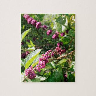 Wildes Beautyberry Bush draußen an sonnigem Puzzle