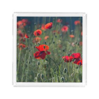 Wildes Feld der Mohnblumen Acryl Tablett