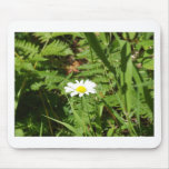 Wildes Gänseblümchen mit Farnen Mousepads