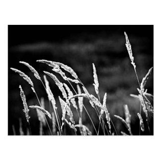 Wildes Gras in Schwarzweiss Postkarte