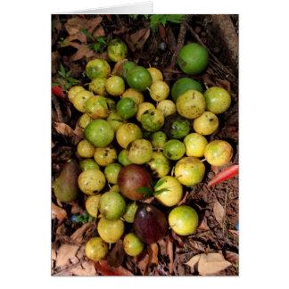 Wildes hawaiisches lilikoi u. Avocados Karte
